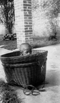 Abandoned Child in a Basket